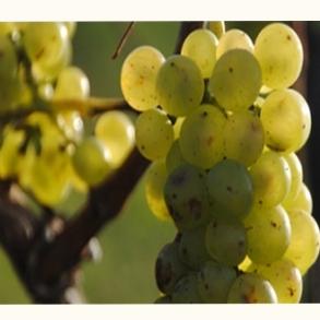 Gavekort og vinbog